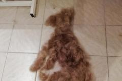 Hund_Fell