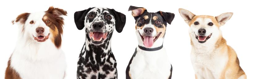 4 Hunde die süß sind